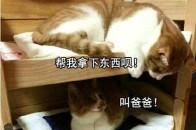 狐诌冷笑话:妈妈,吃了这个葫芦种子,给我生个葫芦娃!